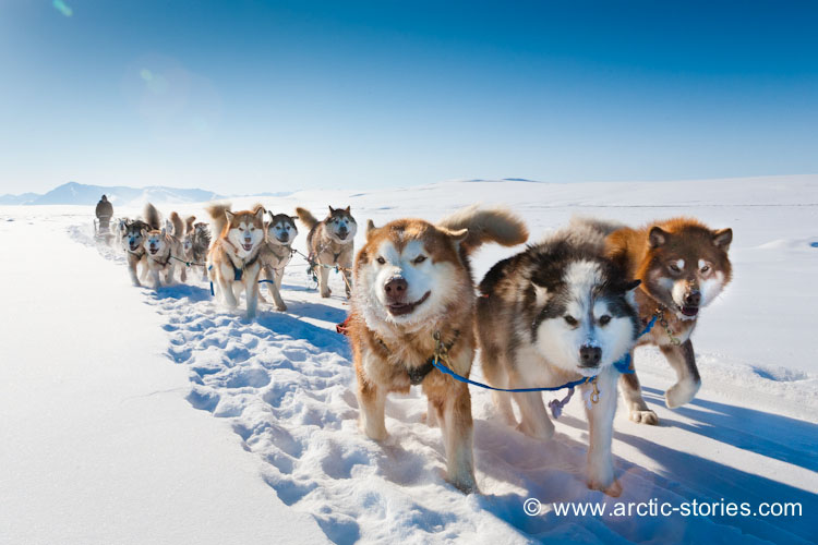 Stories From The Arctic Winter